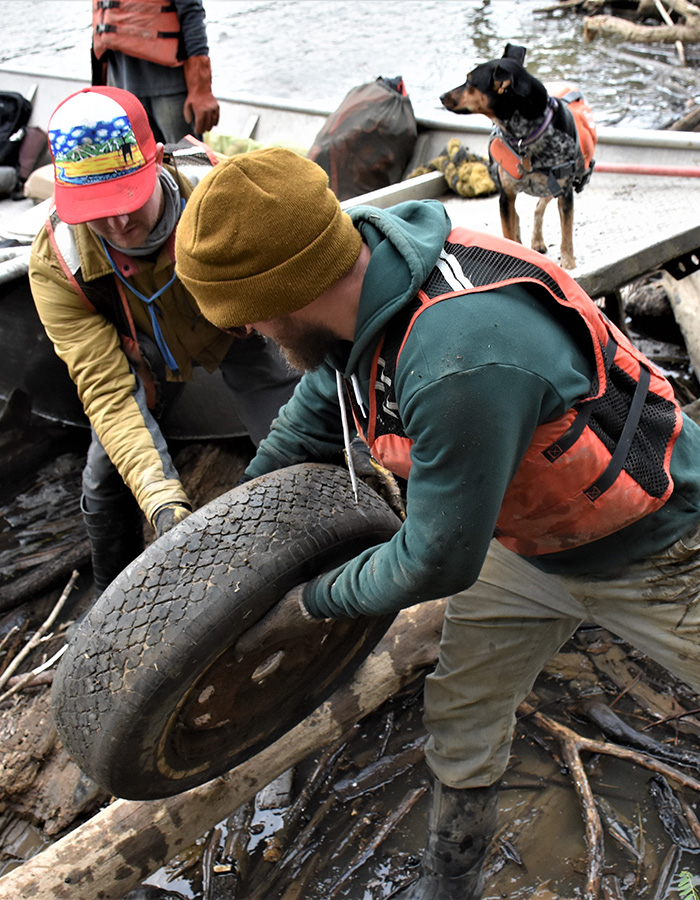 Volunteer removes old tire from river bank
